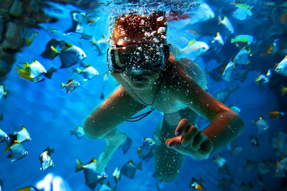 Image description: Snorkelling with fish