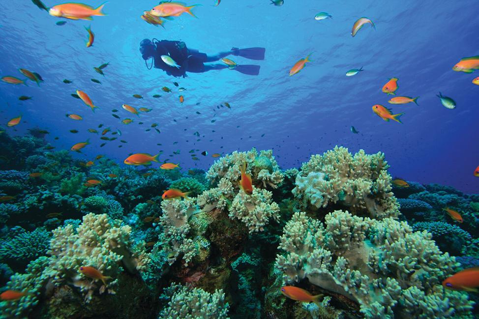 Image description: Scubadiving in Bali